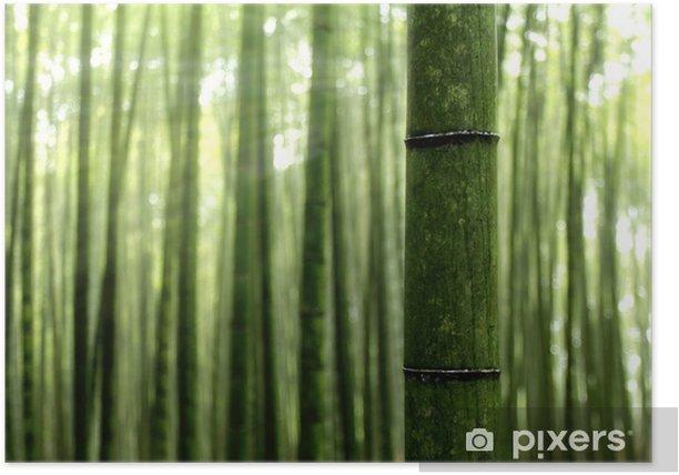 Poster Forêt de bambou dans le soleil du matin - Plantes