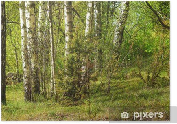 Poster Forêt de bouleaux - Thèmes