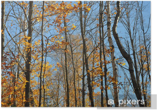Poster Forêt de feuillus d'automne - Saisons