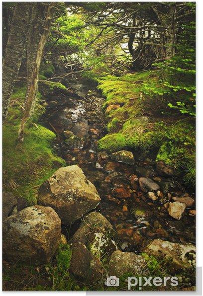 Poster Forêt du ruisseau - Forêt