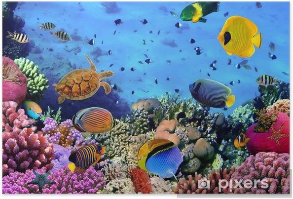 Poster Foto van een koraal kolonie -