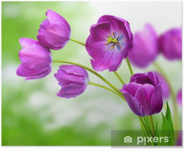 Poster Fraîches tulipes pourpres - Thèmes
