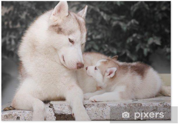 framsook Poster - Dogs