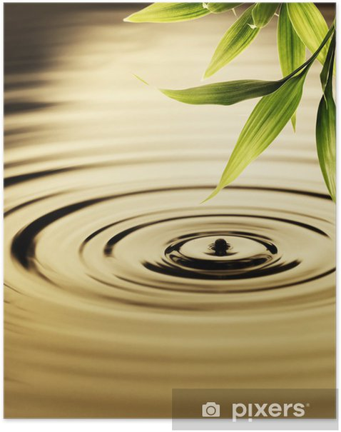 Fresh bamboo leaves over water Poster - Styles