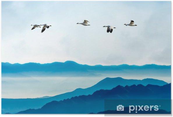 Poster Gäss som flyger mot blå himmel bakgrund - Djur