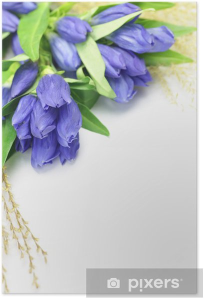 gentian and Japanese pampas grass Poster - Flowers