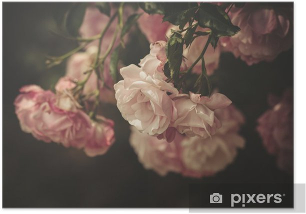 gentle roses Poster - iStaging