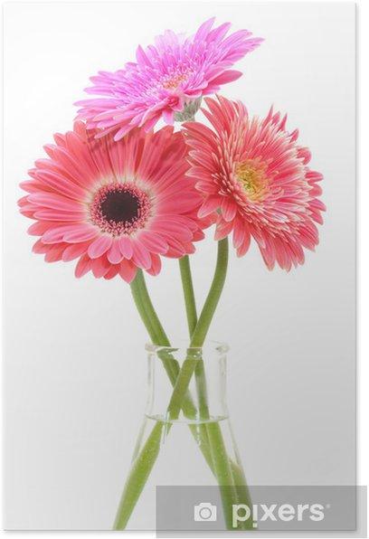 Poster Gerbera bouquet de fleurs isolé sur fond blanc. - Fleurs