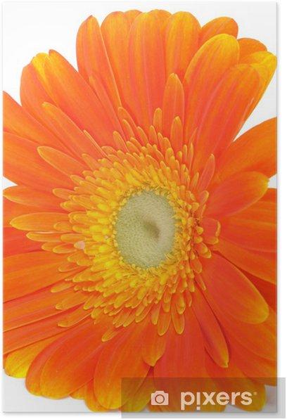 Poster Gerbera orange marguerite - Fleurs
