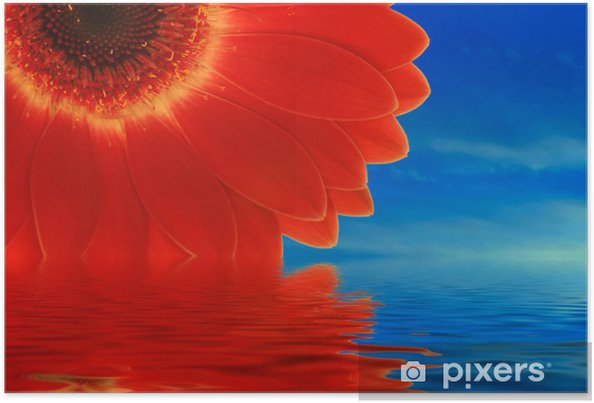 Póster Gerbera rojo, reflexión - Mamíferos