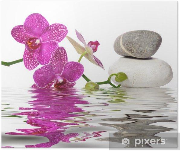 Poster Gewoon prachtige orchideeën - Bestverkocht