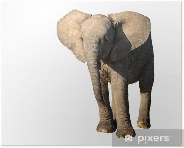 giovane elefante Poster - Mammals