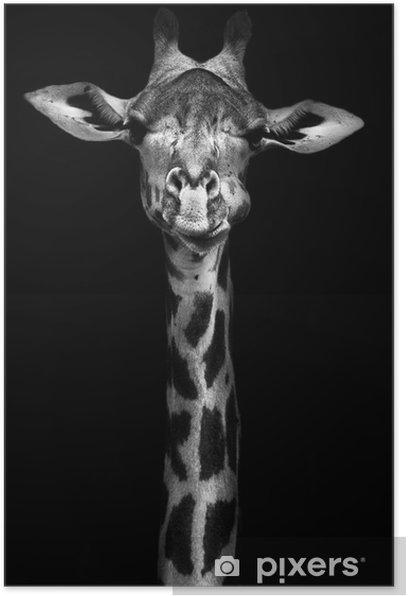 Giraffe in Black and White Poster -