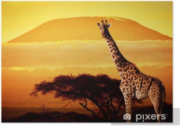 Giraffe on savanna. Mount Kilimanjaro at sunset. Safari Poster - Themes