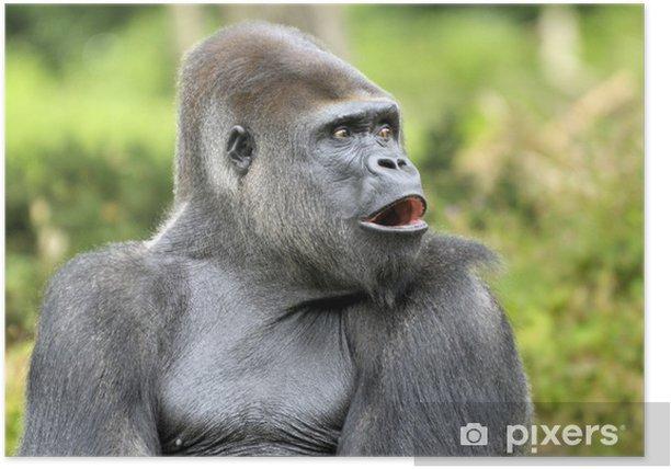 Poster Gorille dos argenté - Merveilles naturelles