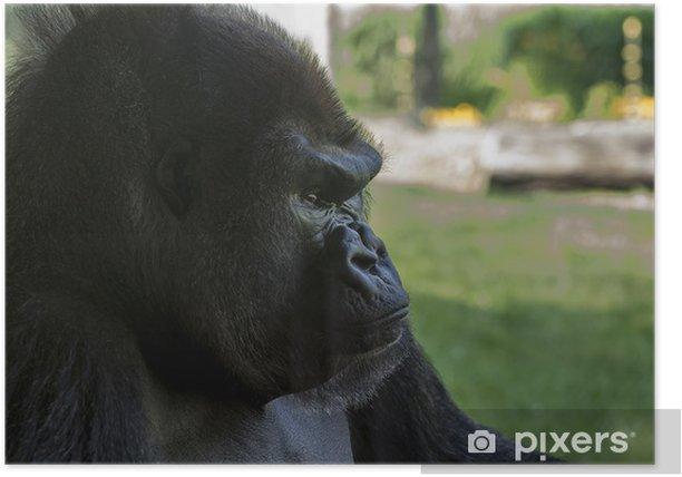 Poster Gorilles de montagne - Mammifères