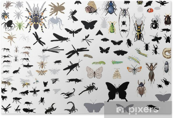 Poster Grand ensemble d'insectes et d'araignées isolées - Autres Autres