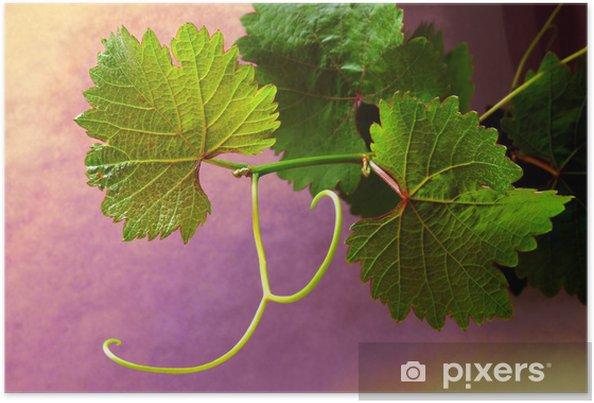 Poster Grapevine på färgglada bakgrunder - Växter