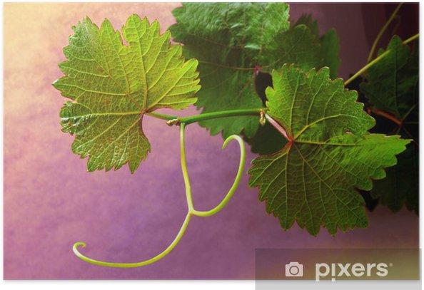 Poster Grapevine sur fonds colorés - Plantes