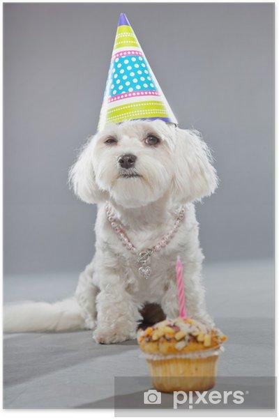 poster grappige maltese verjaardag hond met taart en hoed. studio
