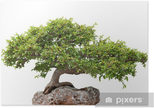 Green Bonsai Tree Growing On A Rock Poster Pixers We Live To Change
