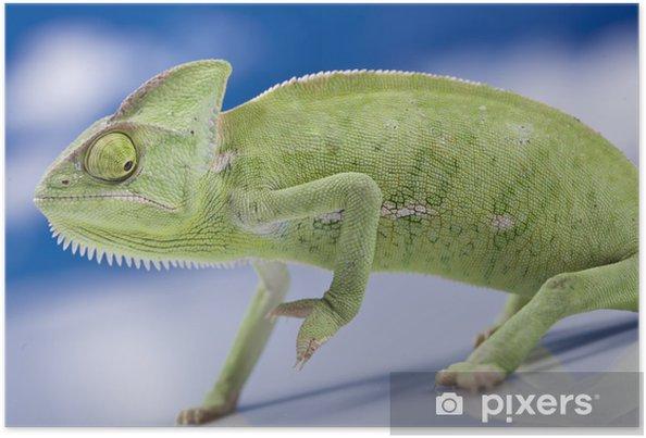 Poster Green chameleon - Thèmes