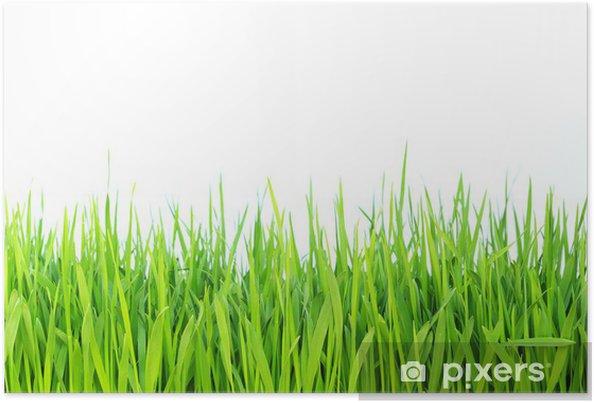 Póster Green grass - Destinos