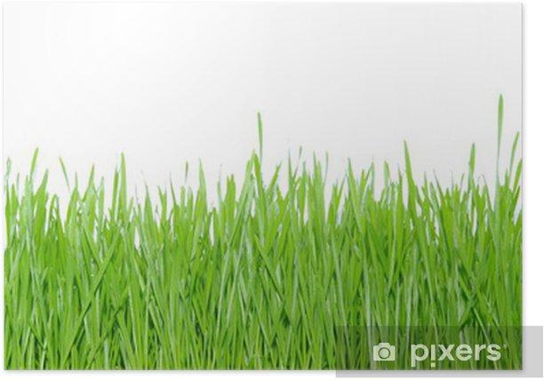 Poster Green grass - Plantes