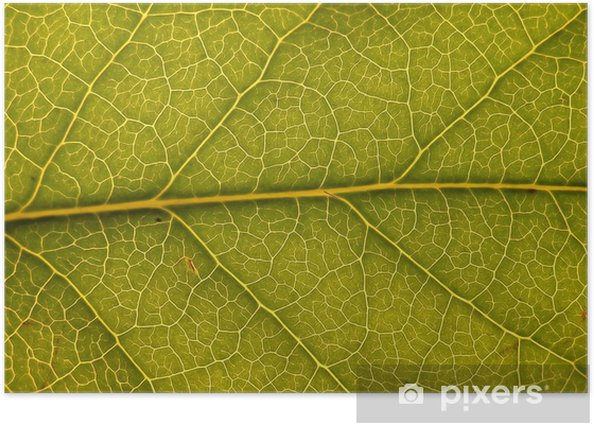 green leaf with structure Poster - Seasons