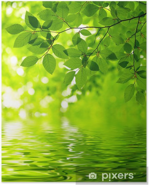 Póster Green leaves -