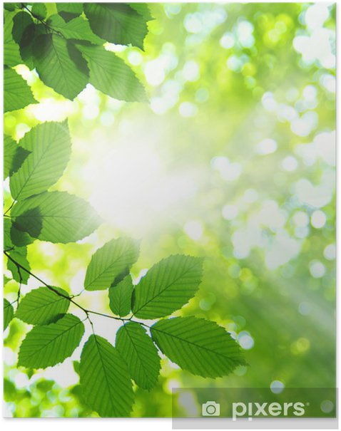 Green leaves Poster - Themes