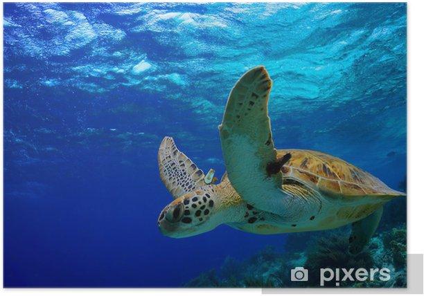 Poster Green Sea Turtle nage le long de récifs tropicaux - Autres Autres