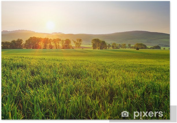 Green wheat field Poster - Themes