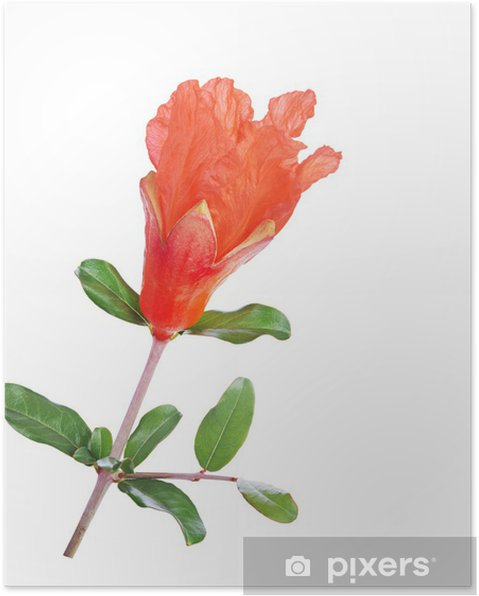 Poster Grenade fleurs - Fleurs