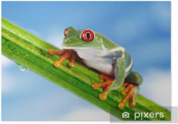 Poster Grenouille verte avec des yeux rouges. - Autres Autres