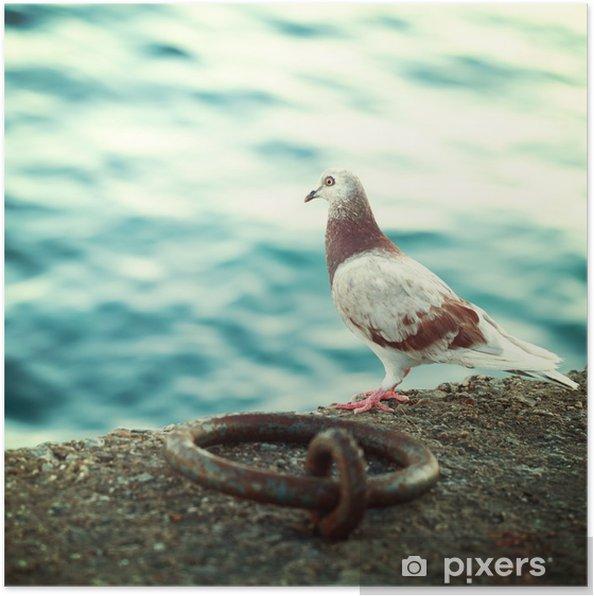 Poster Griekse duif op de promenade in Kreta, impressies van Griekenland - Reizen