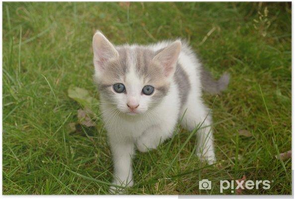 Super Poster Grijs en wit kitten in het gras • Pixers® - We leven om te DY-21