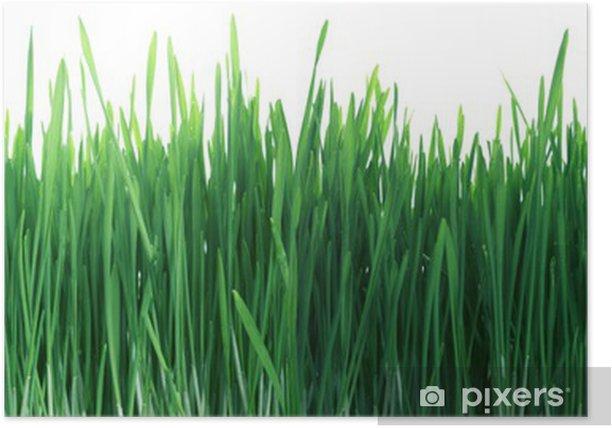 Poster Groen Gras Panorama Naadloze Tegel Tegels Herhalen Geïsoleerde - Planten