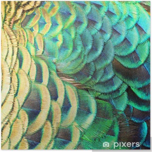 Poster Groene pauw veren - Grondstoffen