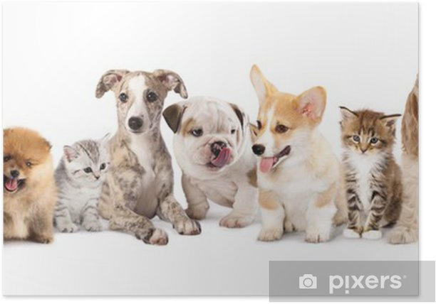 Group Of Puppies фтв Kitten Of Different Breeds Cat And Dog Poster