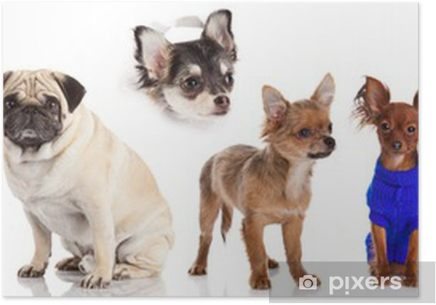 Group Of Puppies On A White Background Group Of Dogs Poster
