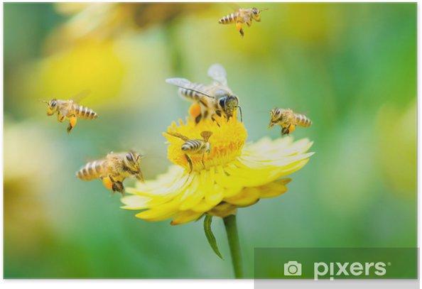 Poster Groupe d'abeilles sur une fleur - Saisons