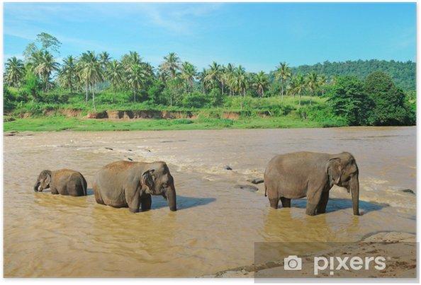 Poster Groupe d'éléphants dans la rivière - Saisons