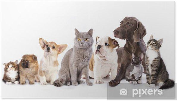 Poster Groupe de chats et de chiens en arrière-plan blanc, chat et chien - Sticker mural
