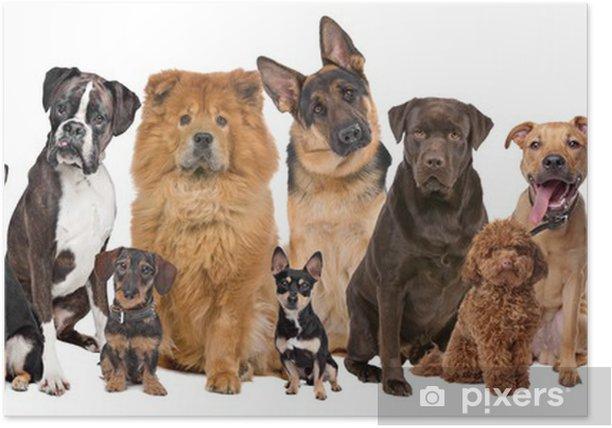 Poster Groupe de douze chiens - iStaging