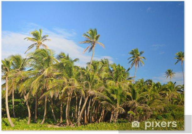 Poster Grove de palmiers - Palmiers