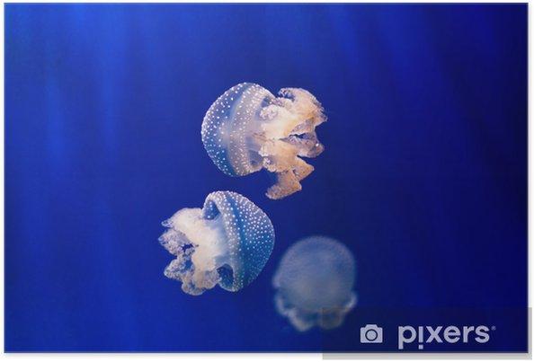 Póster Grupo de medusas de color azul claro sobre fondo azul - Animales marinos