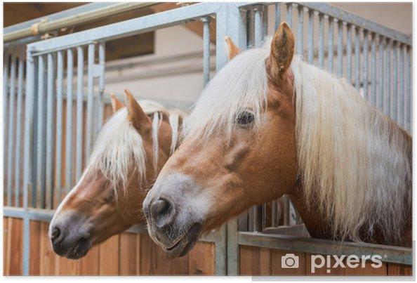 Verrassende Kinderkamer Paarden : Poster haflinger paarden in stal u2022 pixers® we leven om te veranderen
