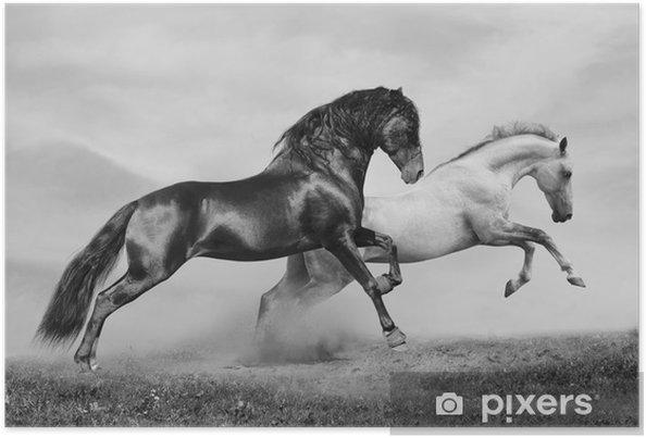 Poster Hästar springa -
