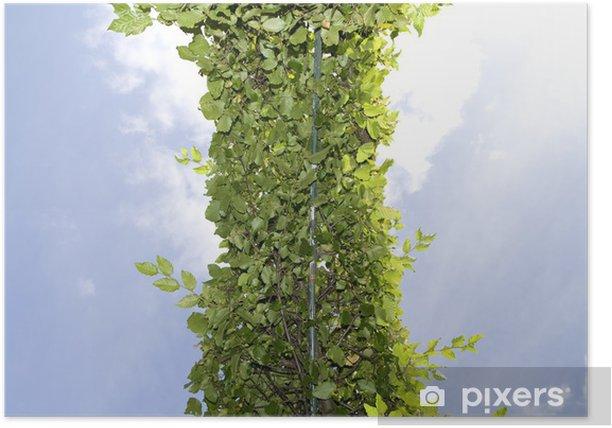 Poster Hecke Himmel - Planten